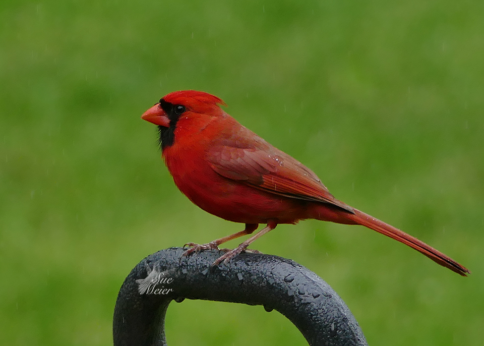 May 25th Cardinal 2