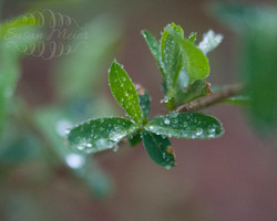 Nature's Leaf
