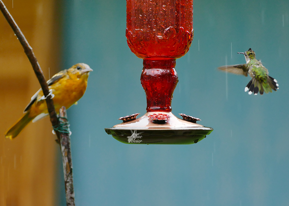 """This is my feeder!"""