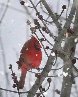 Jan Cardinal