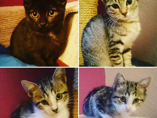 ¡Felizmente adoptados! - Baguira, Strauss y Akela