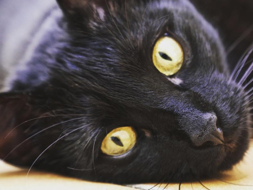 Wildy - Todo un profesional en la terapia asistida con animales