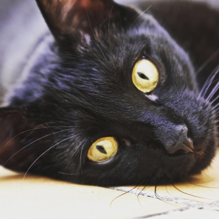 protectora de gatos