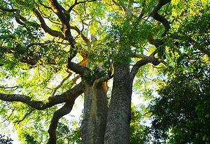 Nature_Tree2.JPG