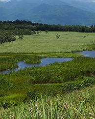 Coastal wetlands2 - Copy.JPG