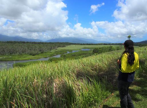 Control of Pond Apple in Eubenangee National Park
