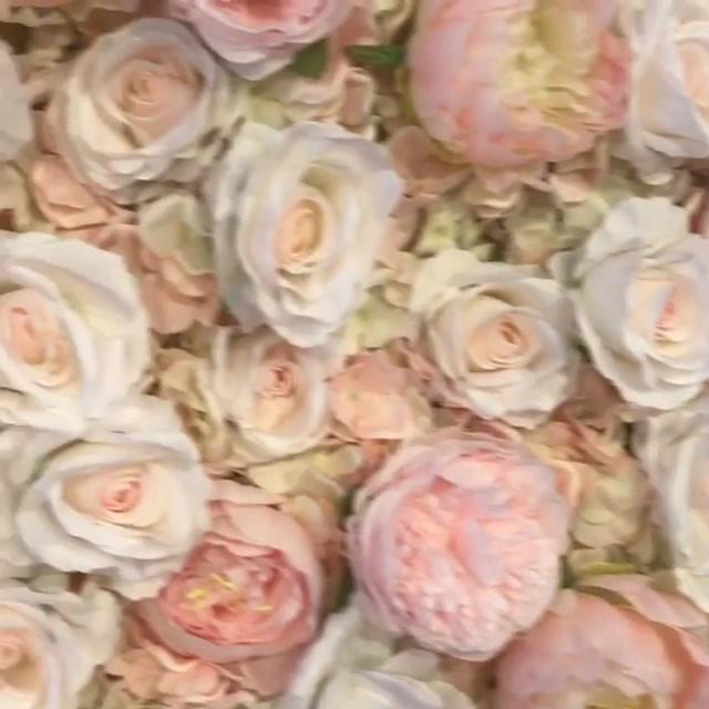 Blush Pink Wall Video