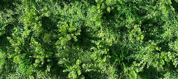 Foliange High Res.jpg
