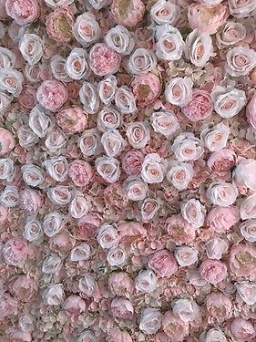 Blush Pink Wall