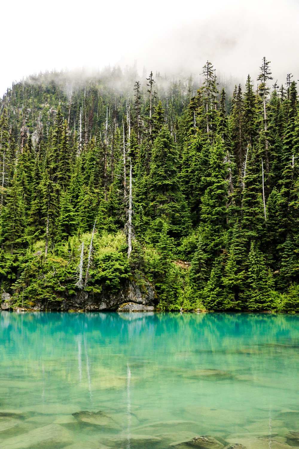 Upper Joffre Lake with trees in the fog