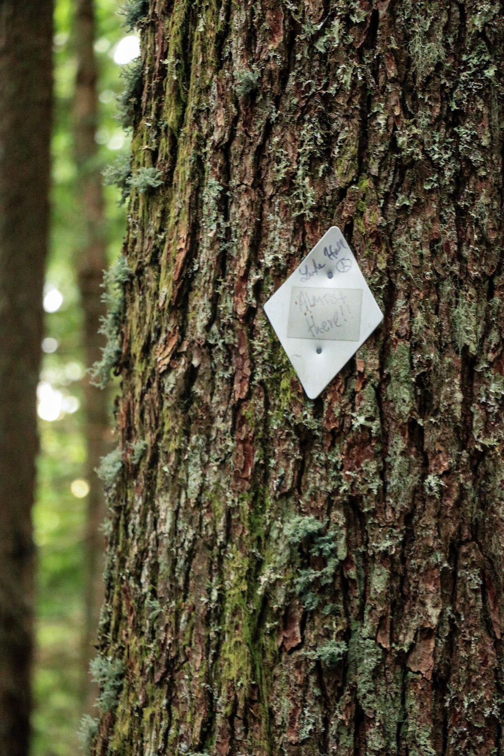 a trail marking diamond nailed to a tree on the mailbox peak trail