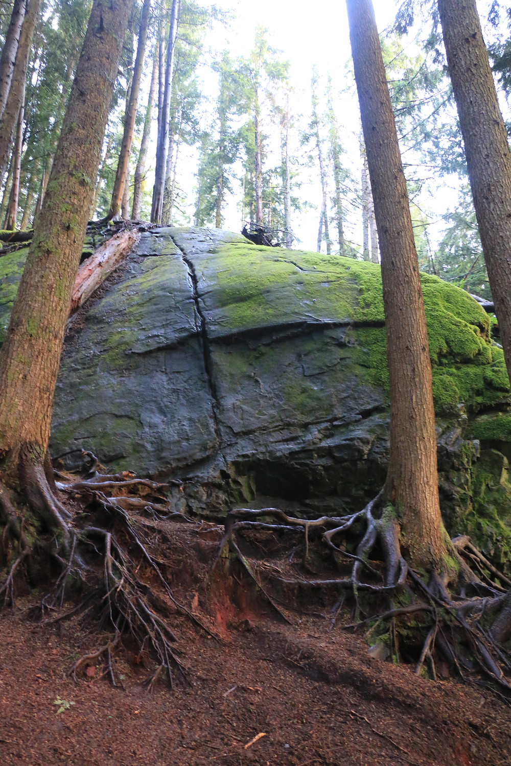 Large boulder behind trees on Dirty Harry's Balcony Trail