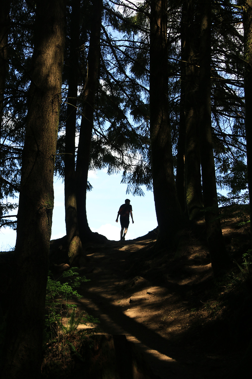 Man hiking to an opening in the trees on Poo Poo Point