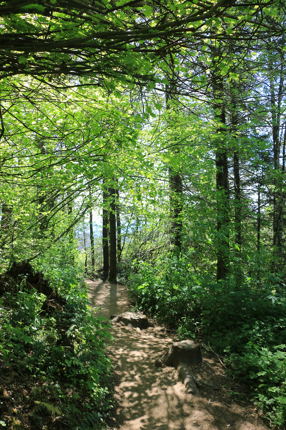 Hiking trail under green canopy of trees