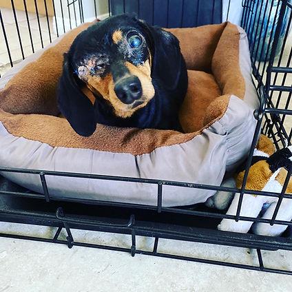 1 pop eye dog.JPG