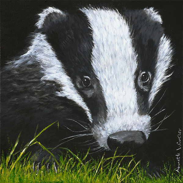 Badger_Web.jpg