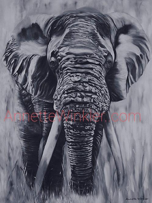 Big Tusker