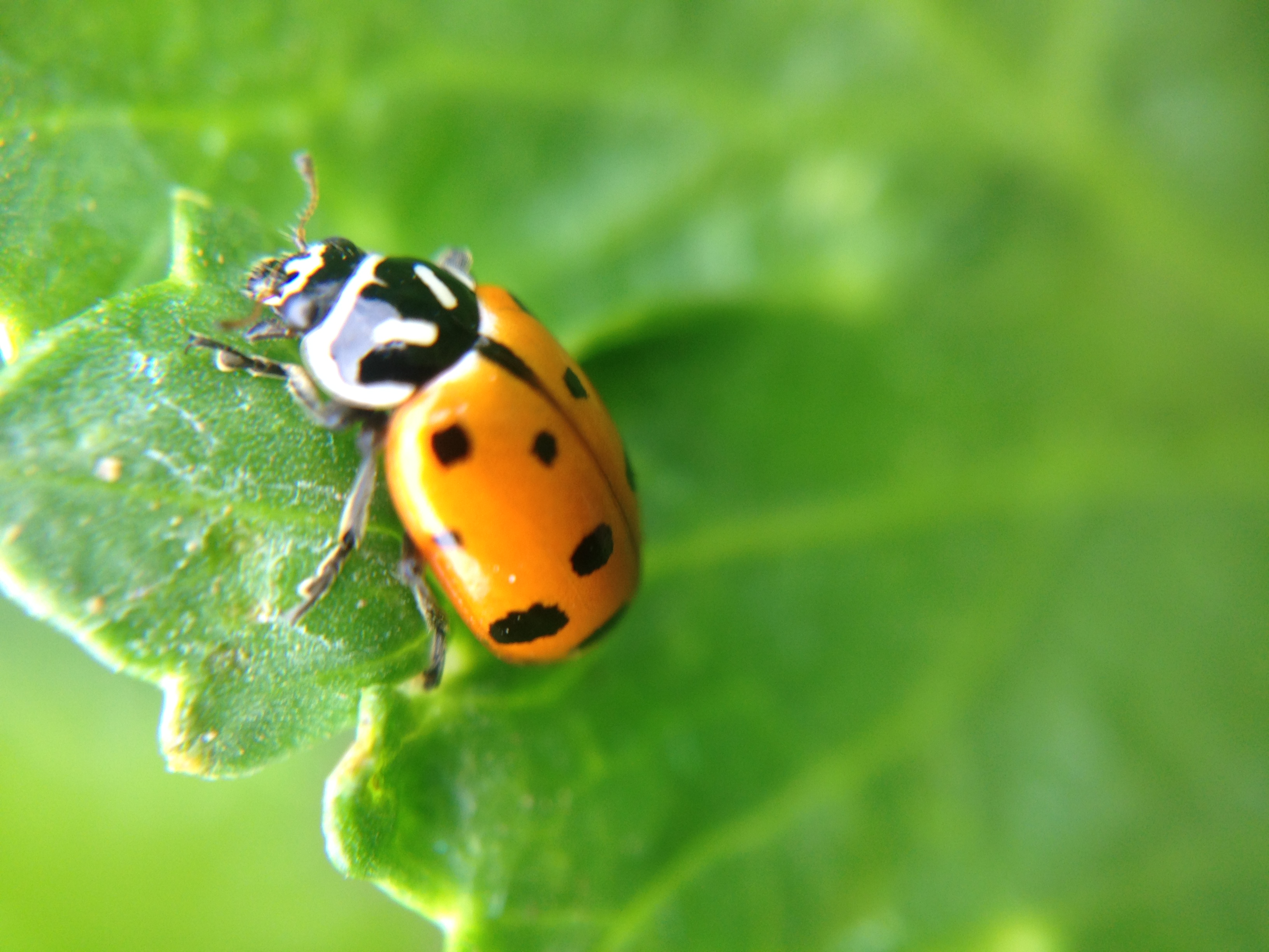 sustainable pest management