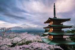 Mt.Fuji and Cherry blossoms