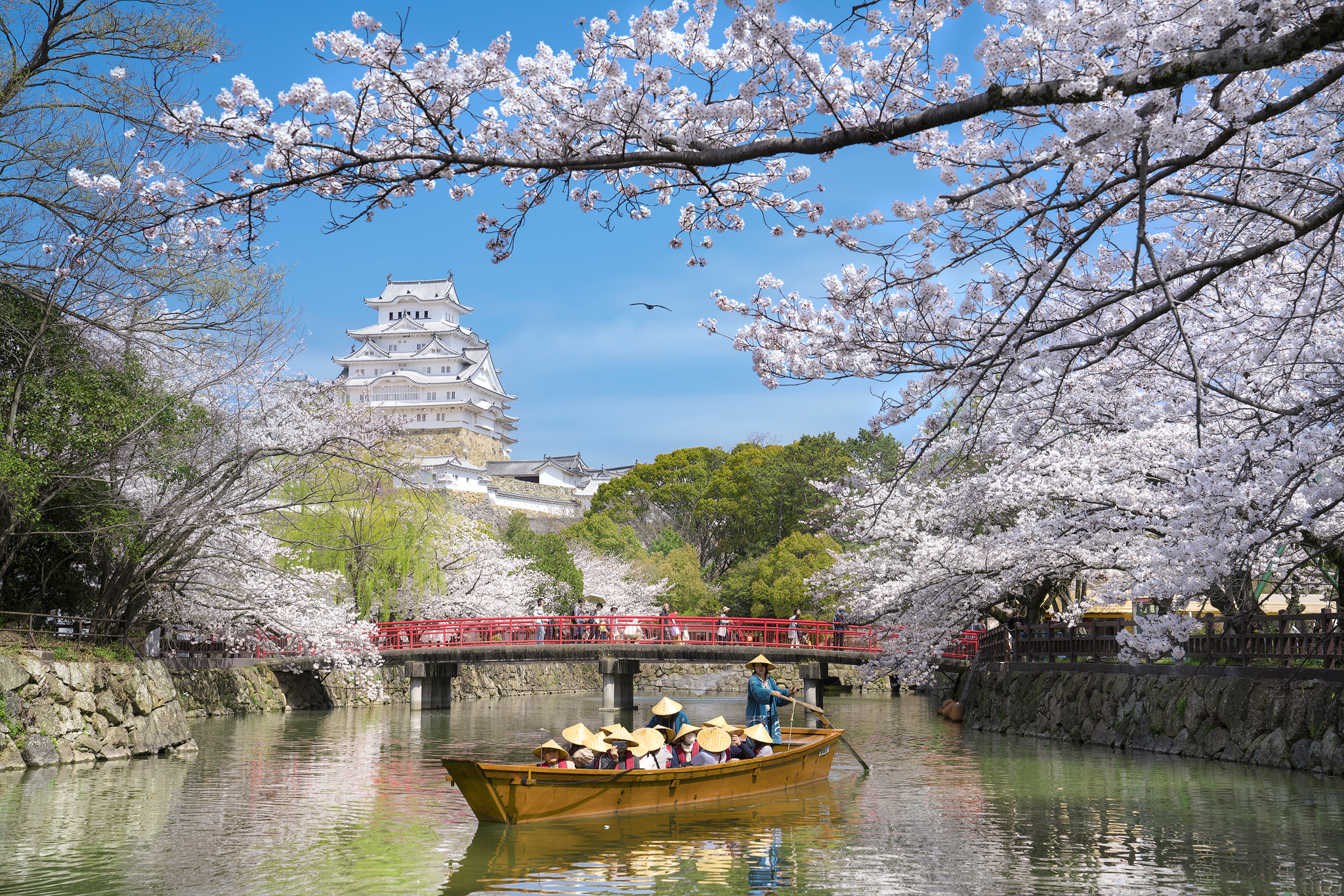 Cherry blossoms of World Heritage Hi
