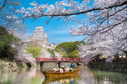Cherry blossoms of World Heritage Hi