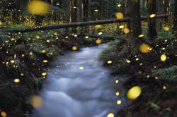 Glittering River