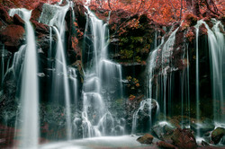 Waterfall Of Red In The Forest