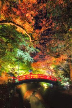Autumn-Leaves-Bridge