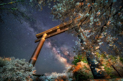 Cherry Blossoms And The Milky Way