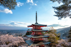 Mt.Fuji and cherry blossoms 3