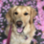 Dog Walking Rates from Evergreen Paws Dog Walking