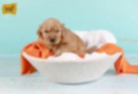Orange boy Puppy1.jpg