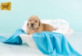 Puppy Girl Blue.jpg