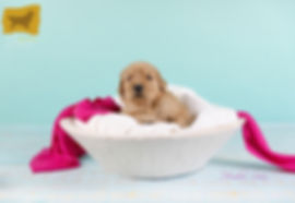 Puppy Girl Pink2.jpg