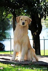 escuela y entrenamiento perros