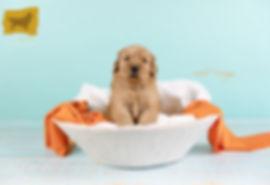 Orange boy Puppy2.jpg