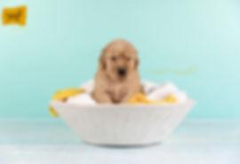 Puppy boy Yellow2.jpg