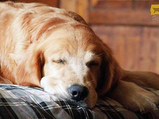 """Poema """"Sólo un perro"""""""
