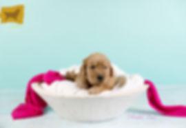 Puppy Girl Pink.jpg