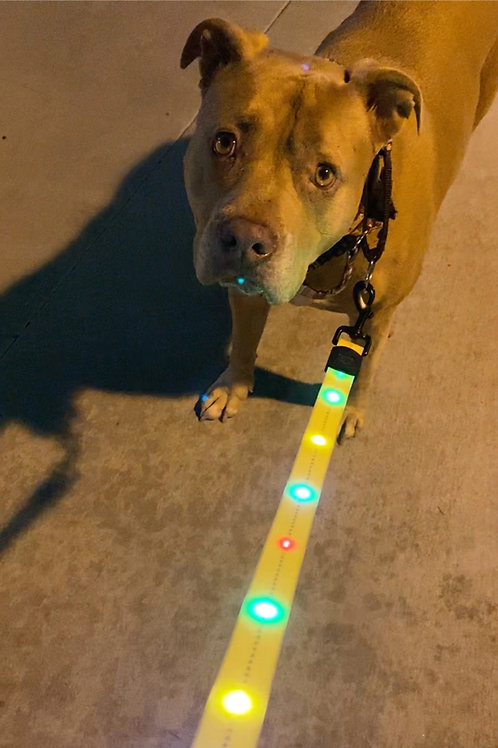 NOW AVAILABLE! Blockhead Brigade Light Up Leash