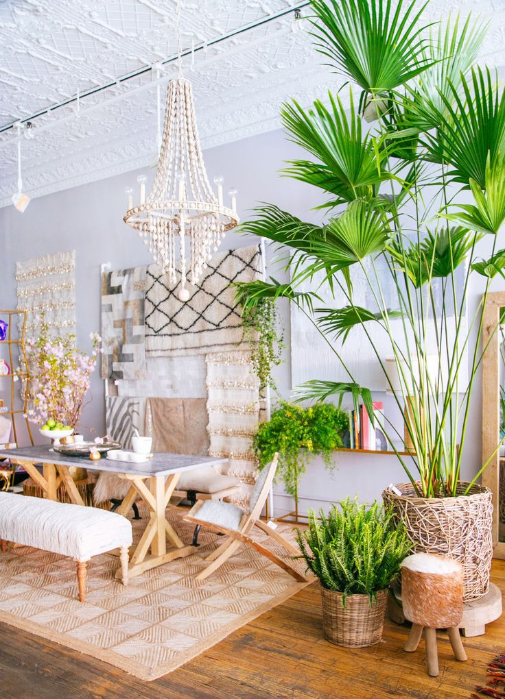 A Lovely Dining Space with indoor plants