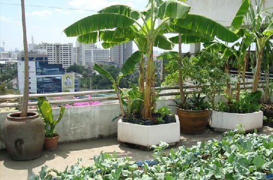 High volume shrubs on terrace