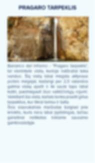 tenerife-keliones-lankytinos-vietos-16-x