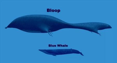 The Bloop...
