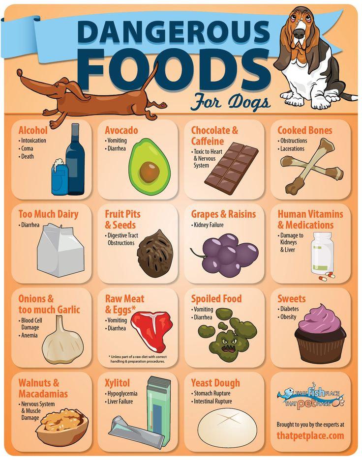 Danger Puppy Foods.jpg