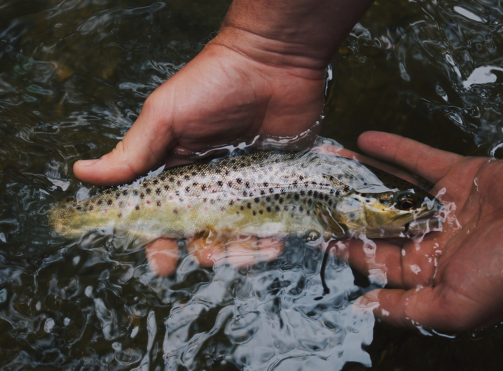 Vidingegård erbjuder fiskeupplevelser i närliggande Alsterån