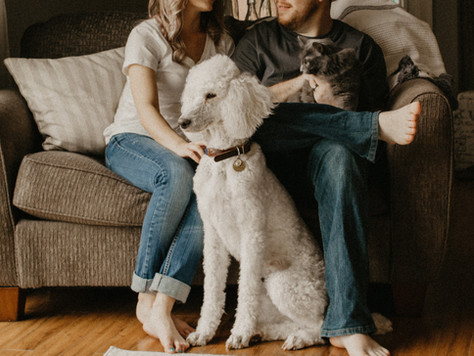 5 Tips to Move Safely with Your Furry Friend