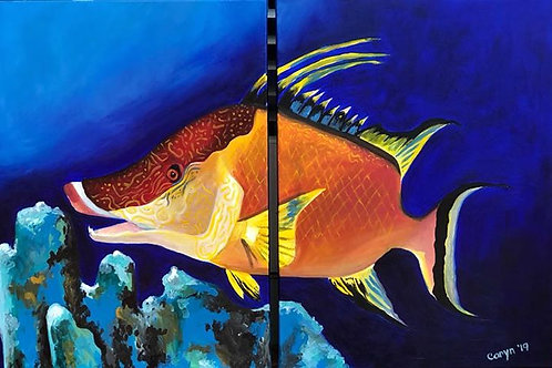 2 Piece Hogfish