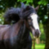 Adopt a Pony - GEORGE. Broadlands RDA, Medstead