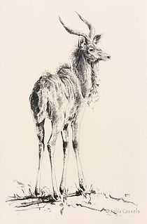 Julia Cassels - Wildlife Artist - 'Kudu',  Charcoal on board,  122 x 82cm,  Unframed,  £995.00